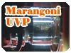 Marangoni Exp