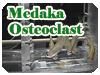 Medaka Osteoclast