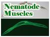 Nematode Muscles