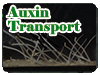 Auxin Transport実験