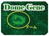 Dome Gene実験