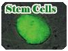 Stem Cells実験