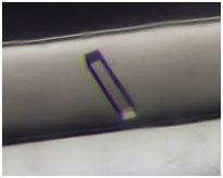 図1 宇宙で得られた結晶