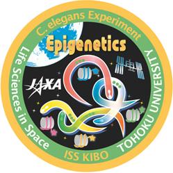 宇宙環境での線虫の経世代における環境適応の研究