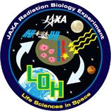 ヒト培養細胞におけるTK変異体のLOHパターン変化の検出