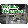 メダカにおける微小重力が破骨細胞に与える影響と重力感知機構の解析