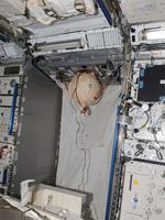 「きぼう」船内実験室に設置されたマトリョーシカ-R球体ファントム(出典:JAXA/FSA)
